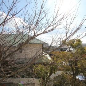 2階から眺められる桜イメージ